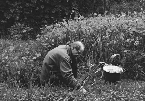 gardener Gardening in garden