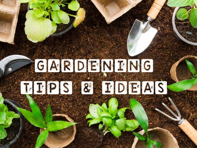 Gardening Blog tips Ideas