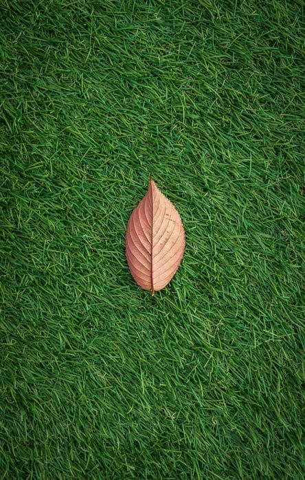 Leaf on the Lawn